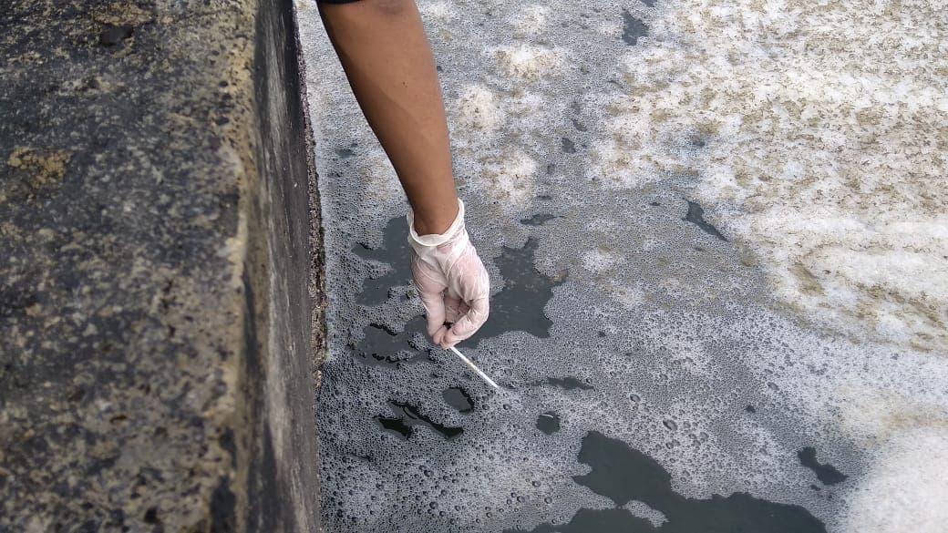 Mempertanyakan kematian penyu di sekitar PLTU Teluk Sepang Bengkulu