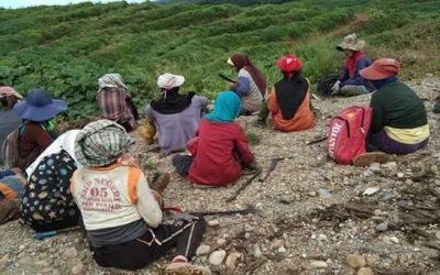 Buruh sawit di Bengkulu kekurangan masker dan tuntut THR