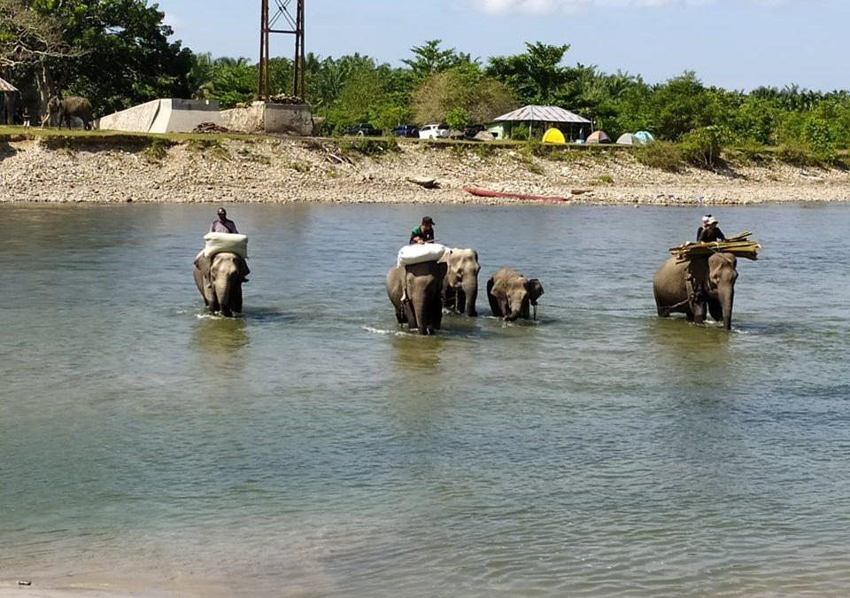 Kawasan Ekosistem Esensial, Harapan Terakhir Pelestarian Gajah di Bentang Seblat