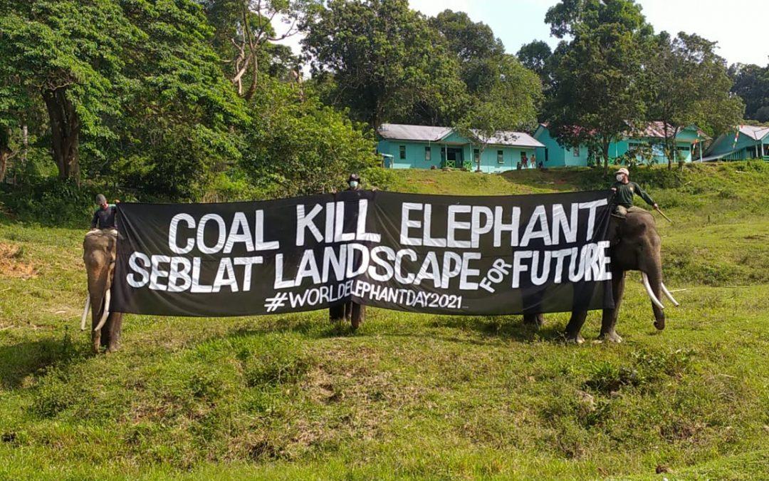 Masa depan gajah Bengkulu dalam kepungan tambang batu bara